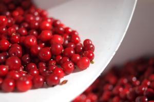 Lingon_berry